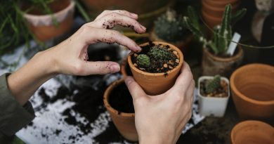 Curso de Jardinagem